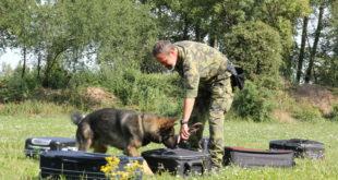 Potřebám armády uzpůsobujeme výcvik, nikoliv psa