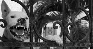 Agresivní chování psů