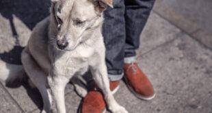 Pořízení štěněte 5.díl – Socializace v prostředí a mezi zvuky