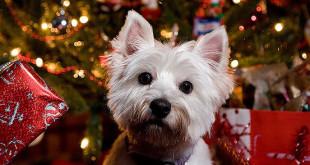 Vánoce se psem