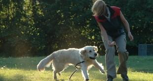 Přivolání – základ poslušného psa