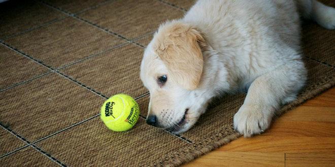 5 činností, kterými rozveselíte znuděného psa i v interiéru