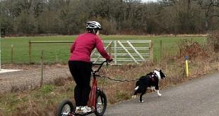 Dog scootering: Zapřáhněte psa za koloběžku