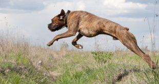 Jak nejlépe unavit temperamentního psa