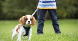 Jak vychovat štěně?