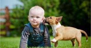 Výběr štěněte – jak vybrat správného chovatele