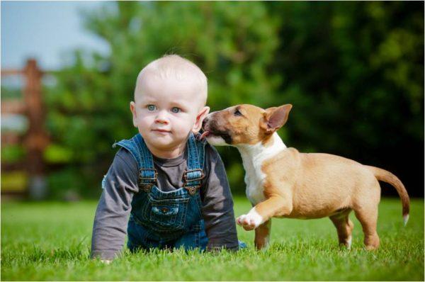Jak vychovat štěně2