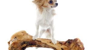 Nebezpečí pro psa v podobě vařených a pečených kostí