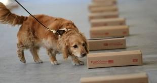 Nosework, sport pro všechny čichavé psy