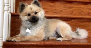Boříme mýty o psech: Psí blechy na člověka nejdou