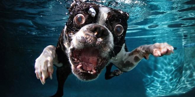 Úžasné: Fotografie štěňat pod vodou