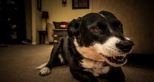 Agresivní pes není k utracení