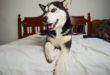 10 důvodů proč bydlet se psem
