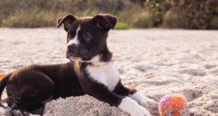 Odpovědnost za škodu způsobenou psem