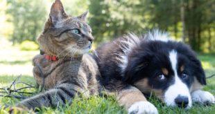 Pojištění domácího mazlíčka. Má vůbec cenu?