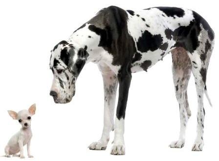 Jak velký pes je pro mě vhodný? - Sportovní kynologie - magazín o psech