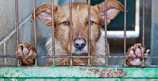 Všechno co byste měli vědět o psech z útulku