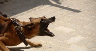Proč mohou vznikat u psů poruchy chování…
