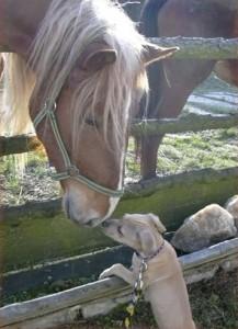 kůň a pes