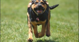 Korektní přivolání psa