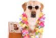 iStock_000017043955Small-Dog
