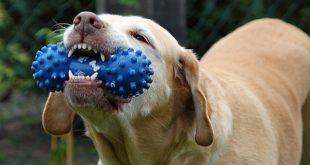 Jak zajistit svému mazlíčkovi zdravé zuby