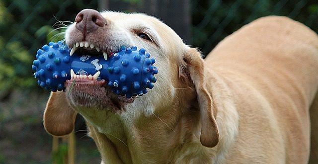 jak-na-zdrave-zuby-psu