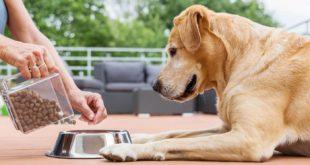 Jak vybrat kvalitní granule pro psa