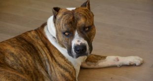 Jak nejlépe uklidnit agresivního psa