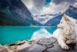 Podmínky pro cestování nejen se psy do zahraničí