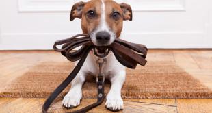 Učení čistotnosti psů, nácvik vykonávání potřeby