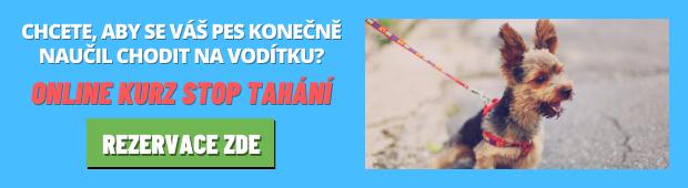 Online psí škola - Kurz STOP TAHÁNÍ