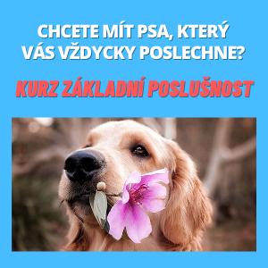 Online kurz Základní poslušnost pro dospělé psy