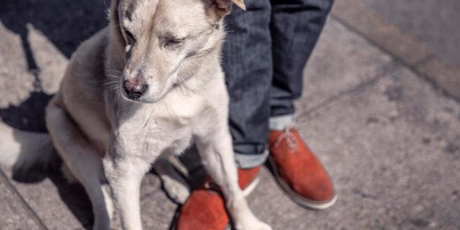 Tisíc Vídeňanů absolvovalo psí kurz