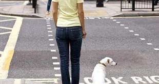 Chůze se psem přes silnici