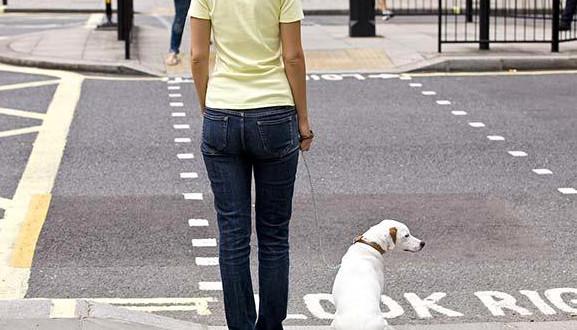 Pes a přechod