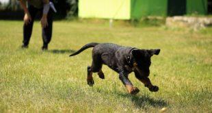Jak nákladný je výcvik a výchova psa?