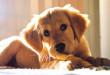 Výchova a výcvik štěněte