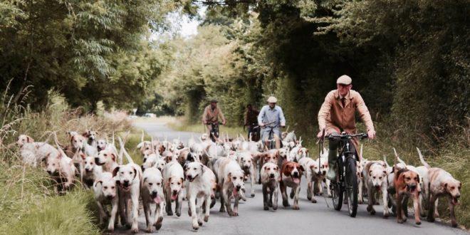 Pojištění pro psy není nadstandard