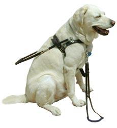 Slepecký pes