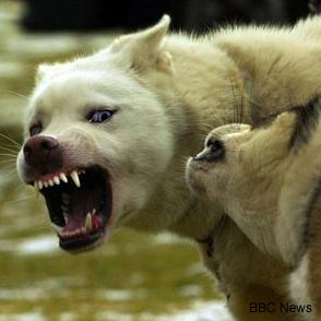 agresivní pes vůči ostatním psům